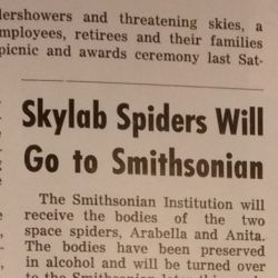 """Skylab Spiders Will Go To Smithsonian"""