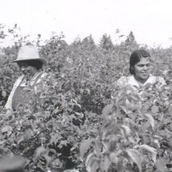 [Kootenai Indians; Northern Idaho Agency, Records of Extension Program, 1924 - 1949 ...]: Mrs. Sam Pablo & Mrs. Grover Methorn Are Found in the Middle of the Raspberry Patch (Can You Find Three Faces?