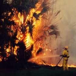 [Florida Extreme Fire Hazard] Wildfire on State Road #11, near Bunnell, Florida. Liz Roll/FEMA