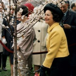 First Lady Lady Bird Johnson Planting a Tree During the Annual Cherry Blossom Festival, Tidal Basin, Washington, DC