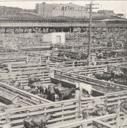 British Army Report on Conditions at American Meatpacking Factories