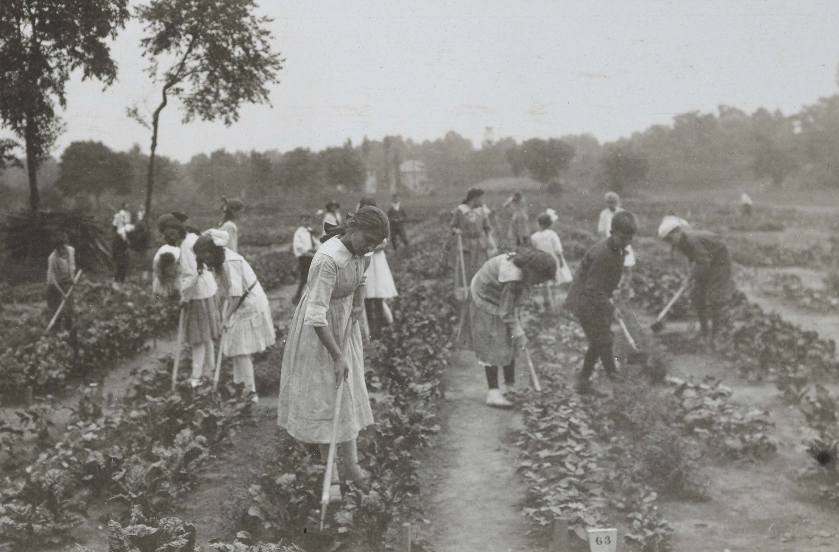War garden activities by the children of the Irving-Jefferson School, Plainfield, New Jersey